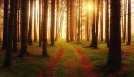 o kursach mindfulness